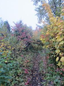 Tudor Hart path