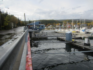 Marina at high tide