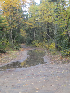 Puddles at the edge of our driveway