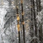 Sun onthe trees