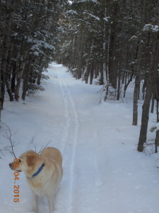 Ella likes to follow to get the best trail but...
