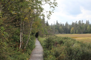 Boardwalk through the forest and out to the beginning of the salt marshes