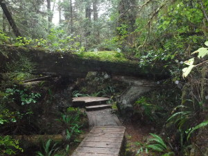 the walkways thorughout attempted to go around or under the fallen trees so as not to disturb the ecosystems